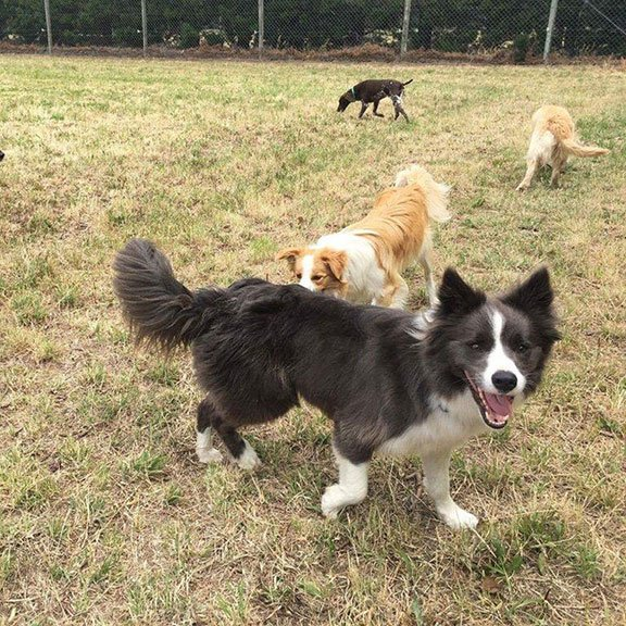 Dog boarding kennel facilities