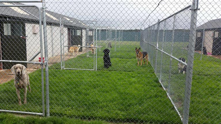 Dog kennels at Top Notch, each dog has their own dog run