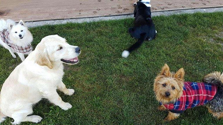 Dogs socialising boarding kennels Canterbury